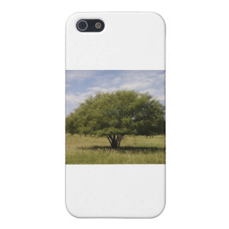 A tree in Texas iPhone 5/5S Cases