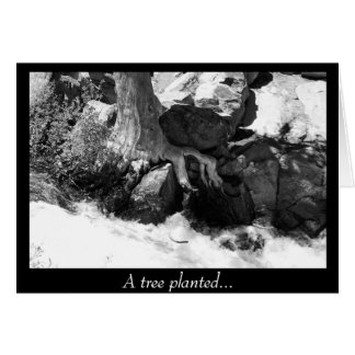 A Tree Planted... Card