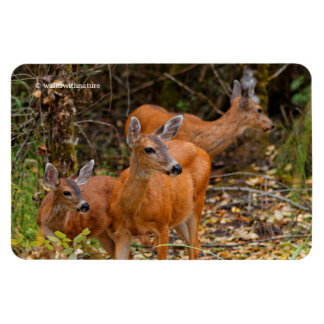 A Trio of Black-Tailed Deer Rectangular Photo Magnet