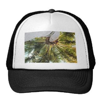 A tropical getaway cap