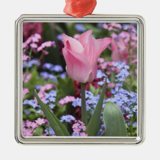 A tulip at Luxembourg Gardens, Paris, France Silver-Colored Square Decoration