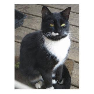 A Tuxedo Cat Postcard