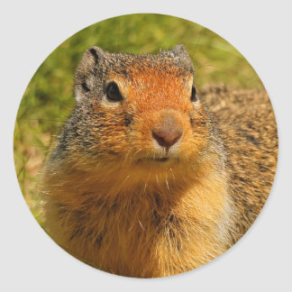 A Twitchy-Nosed Columbian Ground Squirrel Classic Round Sticker