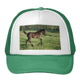 A two week old foals joy cap