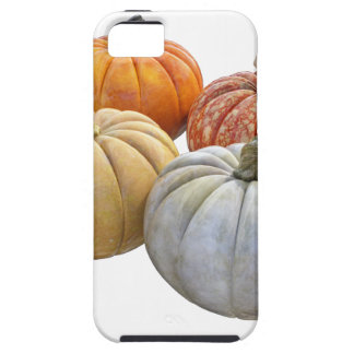 A Variety of Pumpkins iPhone 5 Cases