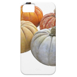A Variety of Pumpkins iPhone 5 Covers