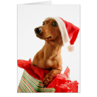 A very Doxie Christmas Greeting Card