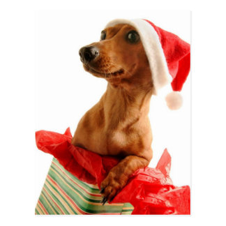 A very Doxie Christmas Postcard