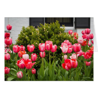 """A View of Tulips"" Card"
