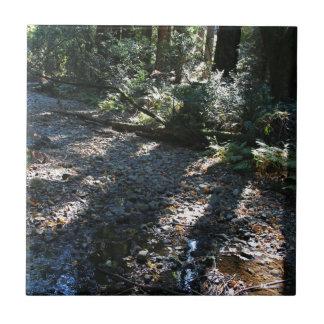 A Walk in Muir Woods Tile