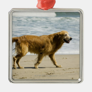A wet dog at the beach. Silver-Colored square decoration