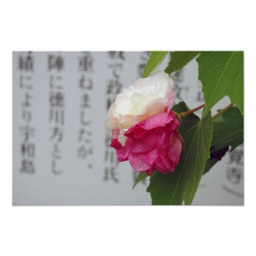 A white, a pink flower and Japanese characters Poster