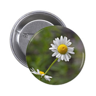 A White Wild Daisy Flower In A Blurred Background 6 Cm Round Badge