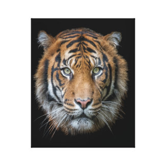 A wild Bengal Tiger face Canvas Print