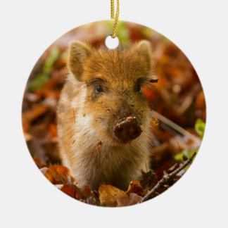 A Wild Boar Piglet Sus Scrofa in the Autumn Leaves Ceramic Ornament
