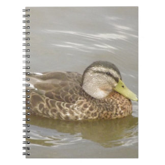 A Wild Duck Swimming Notebooks