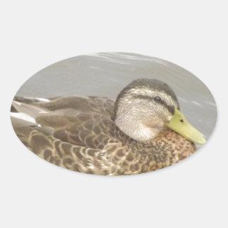 A Wild Duck Swimming Oval Sticker