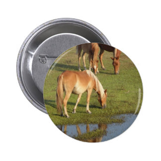 A Wild Mustang Family Grazing in reflection! Buttons