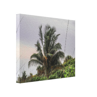 A Wild Palm Tree Blowing in the Wind Canvas Print