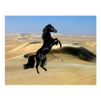 A wild rearing black stallion post cards