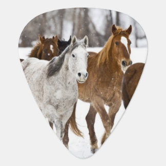 A winter scenic of running horses on The 2 Plectrum