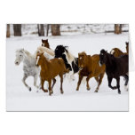 A winter scenic of running horses on The Cards