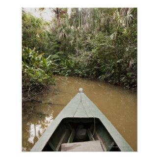 A wooden canoe made of Eucylptus tree floats in 2 Poster