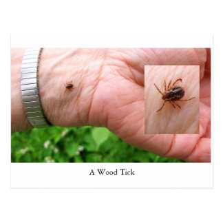 A woodtick, wood tick and hand postcard, bugs postcard