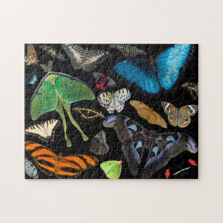A World of Butterflies and Moths. Puzzle