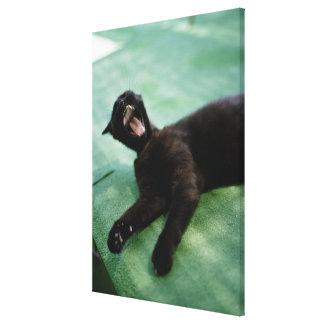 A yawning cat. canvas prints