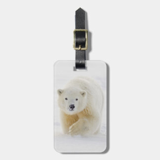 A yearling polar bear cub plays in the snow luggage tag