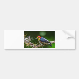 A Yellow Fronted Woodpecker in Brazil Bumper Sticker