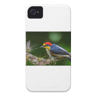 A Yellow Fronted Woodpecker in Brazil Case-Mate iPhone 4 Case