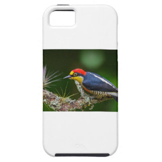 A Yellow Fronted Woodpecker in Brazil iPhone 5 Cover