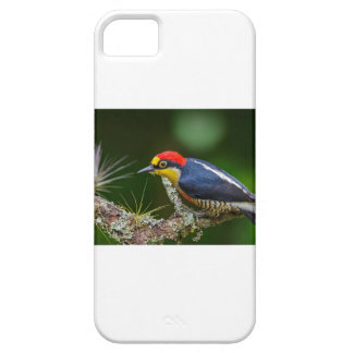 A Yellow Fronted Woodpecker in Brazil iPhone 5 Covers