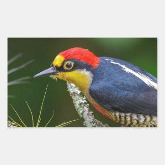 A Yellow Fronted Woodpecker in Brazil Rectangular Sticker
