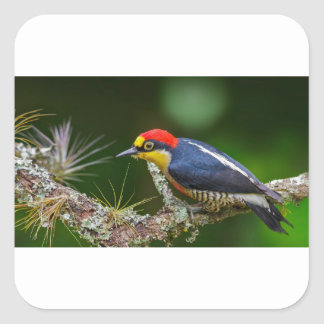 A Yellow Fronted Woodpecker in Brazil Square Sticker