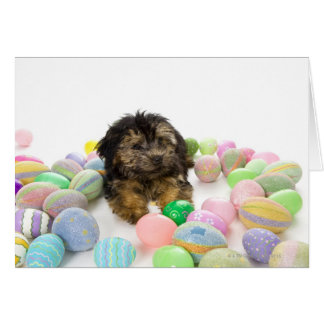 A Yorkie-poo puppy and Easter eggs. Greeting Card