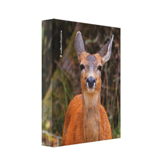A Young Black-Tailed Deer Smiles Canvas Print