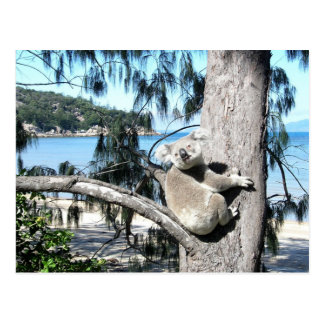 A young koala sits in a tree by the beach postcard