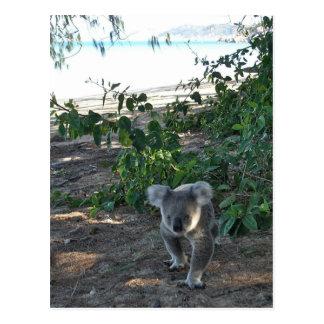 A young koala walks the beach postcard