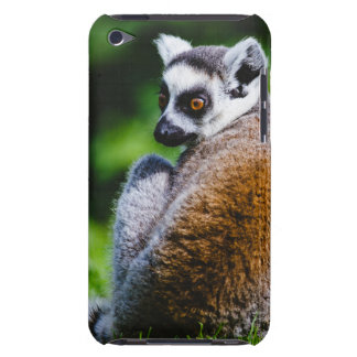 A Young Lemur, Animal Photography Barely There iPod Case
