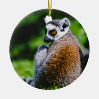 A Young Lemur, Animal Photography Ceramic Ornament