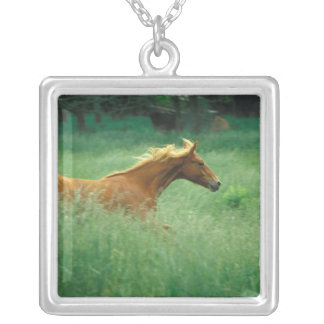 A young stallion runs through a meadow of tall square pendant necklace