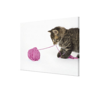 A young tabby kitten playing with a ball of canvas print