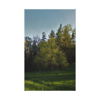 A Young Willow Canvas Print