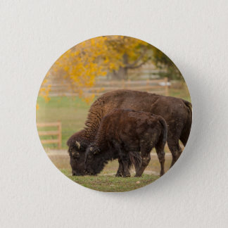 AAutumn Buffaloes Cow and Calf 6 Cm Round Badge