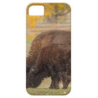 AAutumn Buffaloes Cow and Calf Barely There iPhone 5 Case