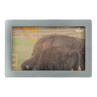 AAutumn Buffaloes Cow and Calf Belt Buckles