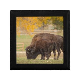 AAutumn Buffaloes Cow and Calf Gift Box